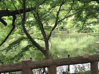 0614井の頭公園2