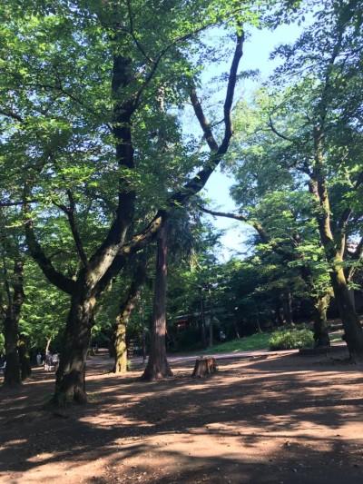 2017 春 井の頭公園